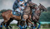 Pony Welfare Fares Well
